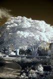 Infrarood Park royalty-vrije stock foto's