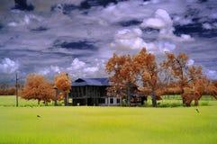 Infrarood traditioneel blokhuis in het midden van padiegebied Royalty-vrije Stock Afbeeldingen
