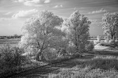 Infrarosso del paesaggio, Fotografia Stock