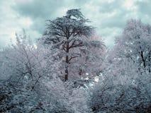 Infrarotbäume Stockbild