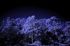 Infrarotbäume mit Hintergrund des bewölkten Himmels Stockbilder