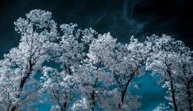 Infrarotlandschaft mit weißen Bäumen und Wasser Lizenzfreie Stockbilder