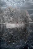 infrarouge de duotone Photographie stock