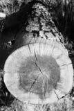 Infrarrojo caido 2 del árbol Fotografía de archivo