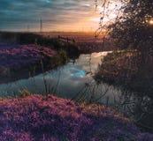 Infravermelho do pântano de Magor Foto de Stock Royalty Free
