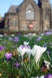 Infront dei fiori bianchi del castello. Fotografie Stock Libere da Diritti
