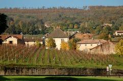 Infront del viñedo de la granja en otoño Fotografía de archivo