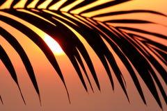 Infront delle palme del sole Fotografia Stock