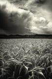 Infuri sopra un campo di frumento fotografia stock