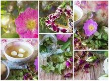 Infusión de hierbas con collage de las rosas Imagen de archivo
