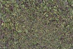 Infusión de hierbas con sabio como fondo Fotos de archivo libres de regalías