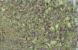 Infusión de hierbas con sabio como fondo Imagen de archivo
