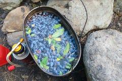 Infusión de hierbas que acampa con las bayas azules Té que acampa de la madreselva en una cocina auténtica del verano del pote imagenes de archivo