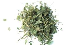 Infusión herbaria de Amachazuru en aislado Fotos de archivo