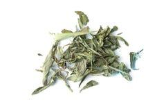 Infusión herbaria del Stevia en aislado Imagen de archivo libre de regalías