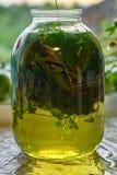 Infusión medicinal de hojas y de hierbas recientemente escogidas en el tarro de cristal Imagen de archivo