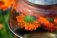 Infusie, thee en afkooksel van bloemen van calendula - gezondheidsdrank stock foto's
