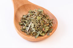 Infusion leaves in wooden spoon. Closeup view Royalty Free Stock Image