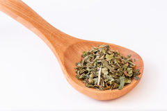 Infusion leaves in wooden spoon - spoon diagonally Stock Image