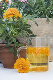 The infusion of the petals Tagetes Stock Photos