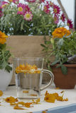 The infusion of the petals Tagetes Royalty Free Stock Image