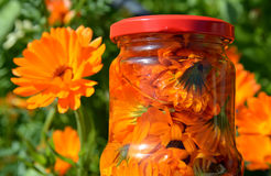 Infusion, tea and decoction of flowers of calendula - health drink Royalty Free Stock Image