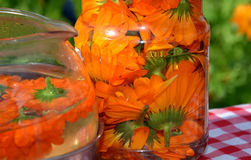 Infusion, tea and decoction of flowers of calendula - health drink Royalty Free Stock Images