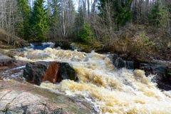 Ingång av den stora bergfloden bland skogen, Karelia, Ryssland royaltyfri fotografi