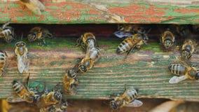 Ingång till bikupan var kolonin av honungsbin bor Royaltyfria Foton