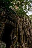 Ingången till den bevuxna templet rotar Royaltyfri Fotografi
