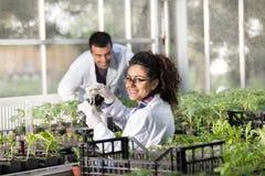 Ingénieurs avec des jeunes plantes en serre chaude image stock