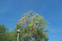 INGA ängar på våren 3 arkivfoto