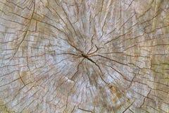 Inga åldrades stumpen, sågad wood textur Royaltyfri Foto