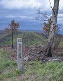Inga bränder undertecknar på kanten av en bränd skog Arkivfoto