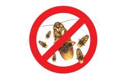 Inga mer gruppkackerlackasymbol, tecken och döda av en kackerlacka Arkivfoto