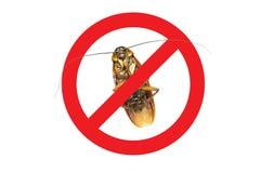 Inga mer kackerlackasymbol, tecken och döda av en kackerlacka Royaltyfri Fotografi