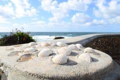 Ingebed Shells stock afbeeldingen