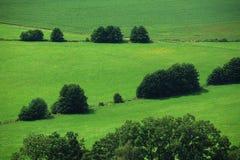 Ingediend groen van de zomer Royalty-vrije Stock Afbeelding