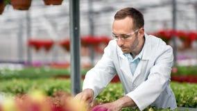 Ingegnere agricolo messo a fuoco che versa fertilizzante chimico dal tubo di vetro alle piante crescenti stock footage