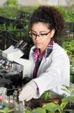 Ingegnere con il microscopio ed i germogli Immagini Stock