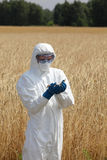 Ingegnere di biotecnologia sul campo che esamina le orecchie mature di grano Fotografia Stock Libera da Diritti