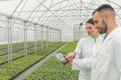 Ingegneri agricoli che usando la serra della compressa Piantine Greenh fotografie stock libere da diritti