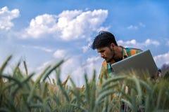Ingegneri agricoli, giovani che occupano nei giacimenti di grano dorati con i computer portatili a disposizione di inizio dell'es immagini stock