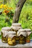 Ingelegde paddestoelen en komkommers Royalty-vrije Stock Afbeeldingen