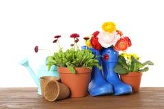 Ingemaakt bloeiend bloemen en het tuinieren materiaal op houten lijst tegen wit stock afbeeldingen