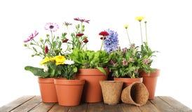 Ingemaakt bloeiend bloemen en het tuinieren materiaal op houten lijst stock foto