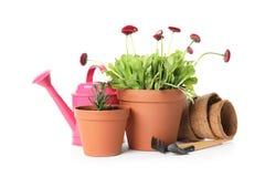 Ingemaakt bloeiend bloemen en het tuinieren materiaal stock foto's