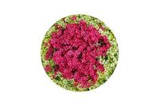Ingemaakte Bloemen Stock Foto's