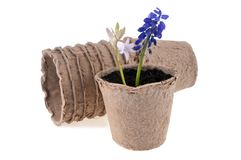 Ingemaakte bloemen in een vezelpot royalty-vrije stock foto