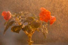 Ingemaakte bloemen op de vensterbank stock afbeelding